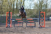 Horse for sale - ROMEO'S GALLA