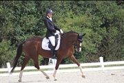 Horse for sale - ROYAL DANCIERA
