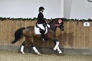 Horse for sale - PATRIK AF HVARRE