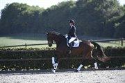 Horse for sale - ZIROCCO OVERSKOVLUND