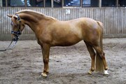 Horse for sale - KNIRKE
