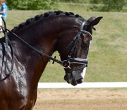 Horse for sale - SCHNELL'S HIGHLIGHT