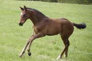 Horse for sale - Frappuccino by KFarstad
