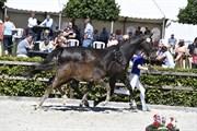 Horse for sale - LOGO'S ZELINA
