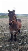 Horse for sale - PATRICK