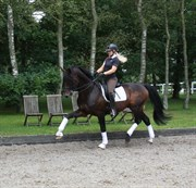 Horse for sale - CERAN A