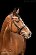 Horse for sale - RUSHDIE