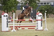 Horse for sale - HUMMELS FALLULAH