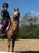 Horse for sale - CLAUSHOLM JOANNA (DNK)
