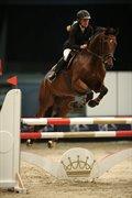 Horse for sale - QUANTUM M Z