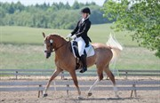 Horse for sale - GIOTTO N
