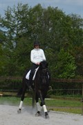 Horse for sale - TANHOLMS FASCHION GIRL
