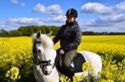 Hest til salg - SHIKIRA