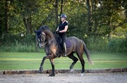 Horse for sale - RØMET'S CASSIOPEIA