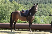 Horse for sale - LOLA