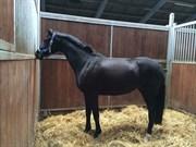 Hest til salg - UNIQUE NOIR (WA NILLA RAVNSKOV)