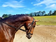 Horse for sale - DAPHNE