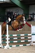 Hest til salg - CC HAMLET