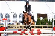 Horse for sale - Kamilla Gade