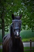 Horse for sale - ELLEBÆK'S FIONA