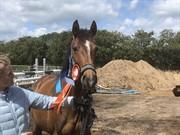 Horse for sale - FØLHOLMS CAMINI