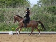 Horse for sale - JAQUELINE OVERSKOVLUND