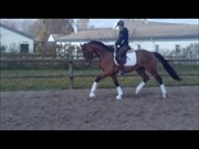 Hest til salg - F.A. BENONI