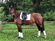 Horse for sale - PIZZICATO