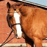 Horse for sale - ALLSTAR