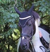 Horse for sale - AMANDA LAMBÆK