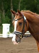 Horse for sale - GREVENS RIPASSO
