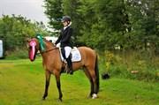 Hest til salg - SANUR LUX