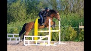 Horse for sale - SURPRICE
