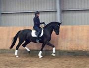 Horse for sale - HØJBO'S UNIQUE