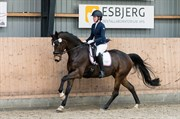 Horse for sale - WINTERBOTTOM B