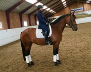 Horse for sale - ASTERIX