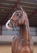 Horse for sale - CASAR Z