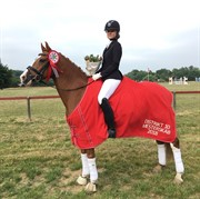 Horse for sale - CHICOS BUNTER WE