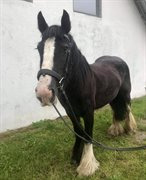Horse for sale - Lady