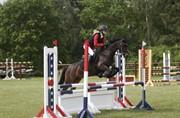 Horse for sale - BJERREGÅRDS KATJA
