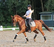 Horse for sale - RAWA'S CHARON