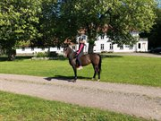 Horse for sale - FELICE