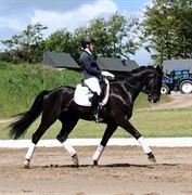 Horse for sale - DON'T THINK TWICE NEXEN