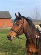 Horse for sale - Minnie