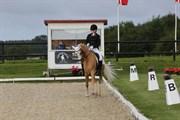 Horse for sale - FLASH GORDON