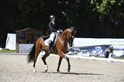 Horse for sale - SEBASTIAN