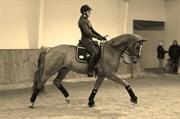 Hest til salg - SAGA