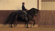 Horse for sale - Bennetton