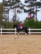 Hest til salg - Morning Star