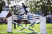 Horse for sale - HELANVILLE VAN DE DERKES
